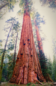 SequoiaNationalPark