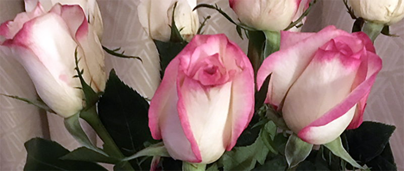 Roses-from-Hubby-7a